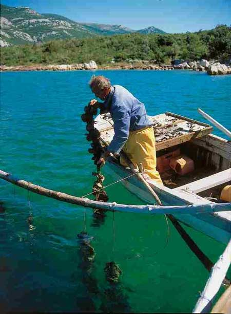 Oyster fisherman